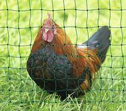 PoultryNet green, not electrifiable